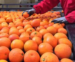 selezione-arance-le-rosse-dell-etna-240x200
