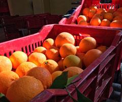cassette-arance-rosse-dell-etna-240x200